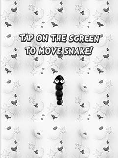 Bild Black and white Snake